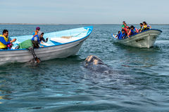 ALFREDO LOPEZ MATEOS - MEXICO - FEBRUARY, 5 2015 - grey whale approaching a boat Stock Image