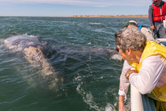 ALFREDO LOPEZ MATEOS - MEXICO - FEBRUARY, 5 2015 - grey whale approaching a boat royalty free stock photos