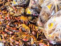 Algún cangrejo salado Fotos de archivo