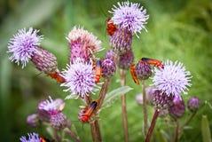 Algún insecto imagen de archivo libre de regalías