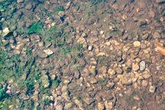 Alg och stenar för damm nedersta Arkivfoto