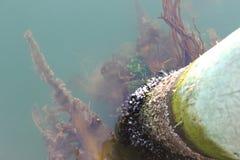 alga Fotografie Stock Libere da Diritti