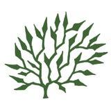 alga royalty illustrazione gratis
