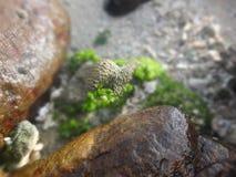 alga Fotografie Stock