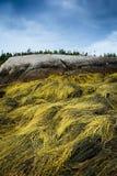 alga Fotografia Stock