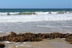 Alga alla spiaggia California di Hermosa nella contea di Los Angeles, California, Stati Uniti fotografia stock libera da diritti