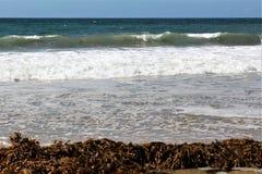 Alga alla spiaggia California di Hermosa nella contea di Los Angeles, California, Stati Uniti fotografie stock