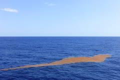 Alga che fa galleggiare il metà di Atlantico fotografia stock