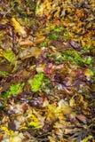 Alga Colourful immagine stock
