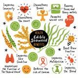 Alga comestível: laminaria, macrocystis, chlorella e fuco Benefícios de saúde, propriedades benéficas Mão engraçada infographic t ilustração stock