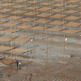 Alga da planta do pescador Imagem de Stock