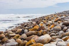 A alga dispersou em uma praia rochosa em Cape Town África do Sul fotografia de stock royalty free