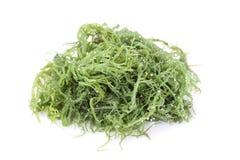 Alga do Laminaria (alga) Fotografia de Stock