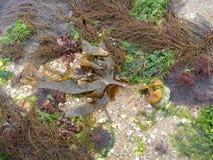Alga e empresa Fotografia de Stock