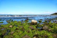Alga ed alghe su Rocky Beach Fotografie Stock Libere da Diritti