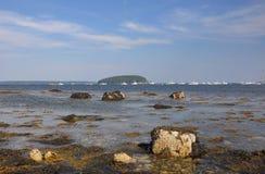 Alga em rochas de uma entrada de Maine Fotos de Stock Royalty Free