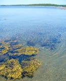 Alga en el banco Fotografía de archivo