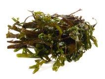 Alga fresca - nutrição saudável imagens de stock royalty free