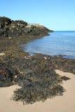 Alga marina Fotografía de archivo libre de regalías