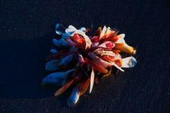 Alga marina Foto de archivo libre de regalías