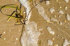 Alga marina, agua de mar con espuma y cáscaras en la arena foto de archivo