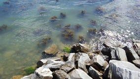 Alga marina apenas debajo de la superficie Foto de archivo