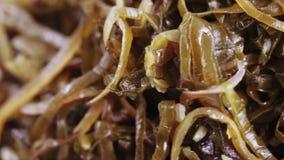Alga marina comestible en bulto metrajes