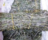 Alga marina comestible secada fotografía de archivo libre de regalías