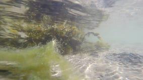 Alga marina con el sol reflector metrajes