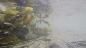 Alga marina con el sol reflector almacen de video