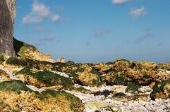 Alga marina de Lowtide Imágenes de archivo libres de regalías