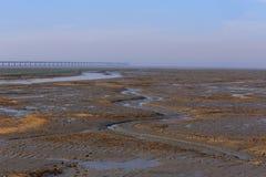 Alga marina de oro, las redes en el plano de marea, el puente más largo del cruz-mar del mundo - puente de la bahía de Hangzhou Fotografía de archivo libre de regalías