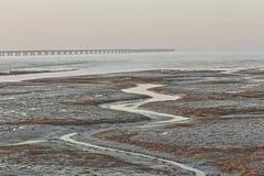 Alga marina de oro, las redes en el plano de marea, el puente más largo del cruz-mar del mundo - puente de la bahía de Hangzhou Imagenes de archivo