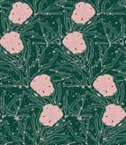 Alga marina del quelpo con el dólar de arena Imagen de archivo libre de regalías