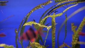 Alga marina en acuario almacen de metraje de vídeo