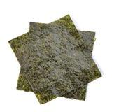 Alga marina en el fondo blanco fotografía de archivo