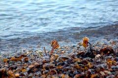 Alga marina en el showerline fotos de archivo