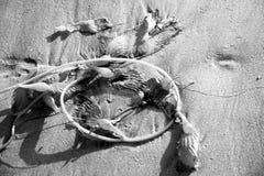 Alga marina en la arena Fotografía de archivo libre de regalías