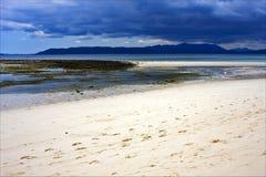 Alga marina en la costa Fotografía de archivo