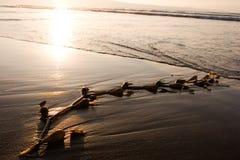 Alga marina en la playa 1 Foto de archivo libre de regalías