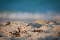 Alga marina en la playa arenosa Foto de archivo
