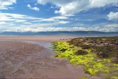 Alga marina en la playa arenosa Foto de archivo libre de regalías