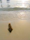 Alga marina en la playa, puesta del sol Imagen de archivo libre de regalías