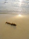 Alga marina en la playa, puesta del sol Imagenes de archivo