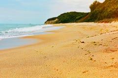 Alga marina en la playa salvaje Fotografía de archivo libre de regalías