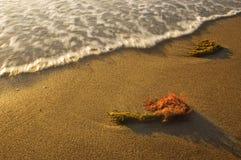 Alga marina en la playa y la onda fotografía de archivo