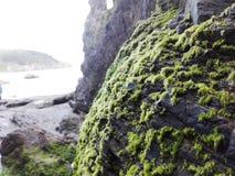 Alga marina en la roca en la playa en Inglaterra Playa rocosa Foto de archivo