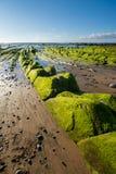 Alga marina a infinito Imagen de archivo