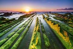 Alga marina a infinito Foto de archivo