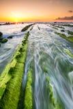 Alga marina a infinito Fotos de archivo
